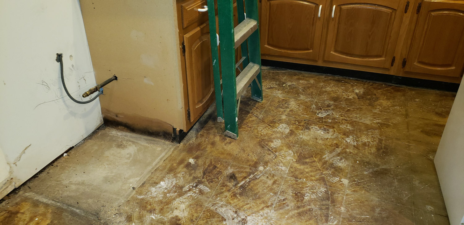 Kitchen Mold Removal and Remediation